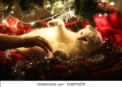 Christmas tree with garlands and a cat in the home interior, the concept of the New Year and Christmas and pets