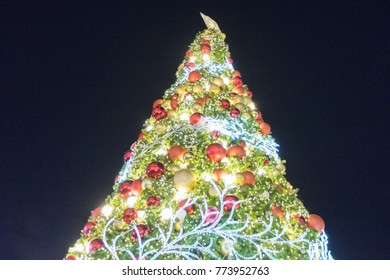 Christmas tree  for a happy new year.