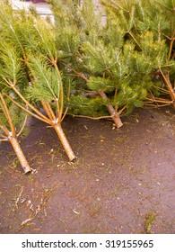 Christmas tree at the market.