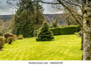 Christmas tree on freshly mowed grass with trees in background