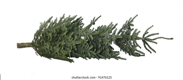 Christmas tree on the ground in white back