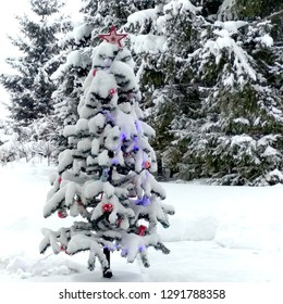 Christmas tree outdoor in a snowy trees