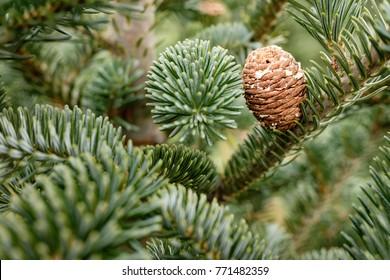 Christmas Tree Pine Cone