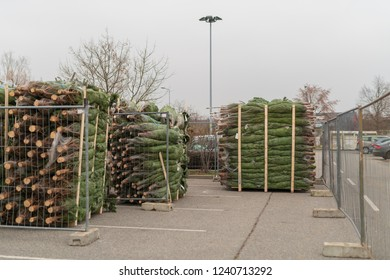 Christmas tree sale on a parking lot