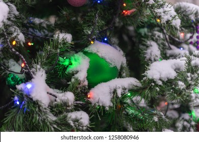 Christmas tree in the snow