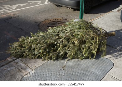 Christmas Tree in Trash