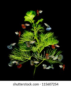 christmas tree underwater concept with guppy fish ornament on black background