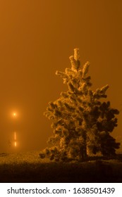 Christmas tree in the winter night