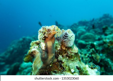 Christmas tree worm and a hairy sea star on a hard coral on the tropical reef of the caribbean island bonaire