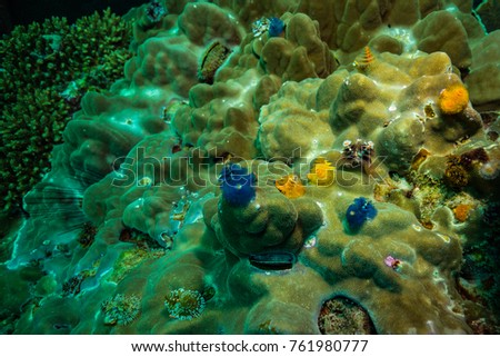 Christmas Tree Worms On Reef Near Stock Photo Edit Now 761980777