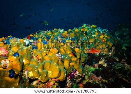 Christmas Tree Worms On Reef Near Stock Photo Edit Now 761980795