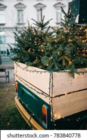 Christmas trees in back of old pickup