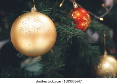 Christmas Trees & Decorations. Gloden bauble hanging from Christmas tree.