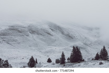 Christmas trees on Jura mountain