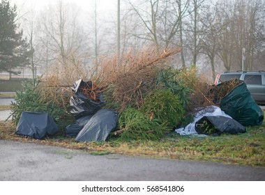 Christmas trees on the scrapyard after the new year.