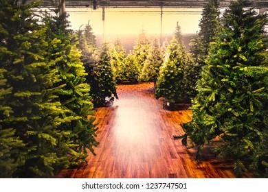 christmas trees store background sale yellow warm tone backlight gleam sunbeam shopping .