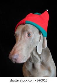 Christmas Weimaraner Dog Elf Hat Merry