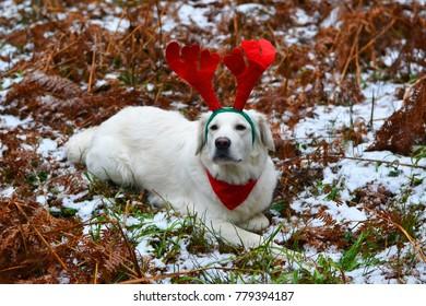 Horns Christmas Dog Images Stock Photos Vectors Shutterstock