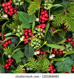 Christmas and winter holly ivy and mistletoe forming a background. Traditional Christmas greeting card for the holiday season.