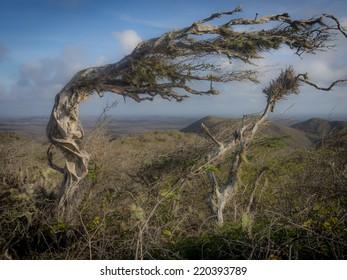 christoffel park and Seru Gracia Curacao a Caribbean island in the Dutch Antilles