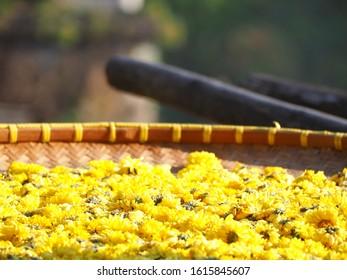 Chrysanthemum flower are arranged in basket then sun bath for Chrysanthemum tea, the flower-based infusion beverage.