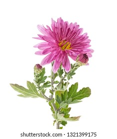 Fiore Grande Stock Photos Images Photography Shutterstock