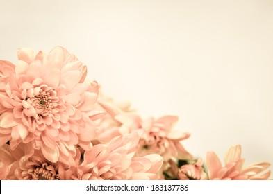 chrysanthemum flower retro effect