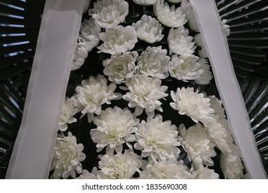 장례식장의 국화꽃