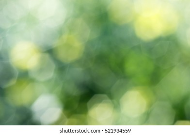 Chrysanthemum flowers are intentionally blurred, out of focus bokeh can see