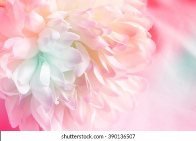 Chrysanthemum flowers made with color filter and blur style for background