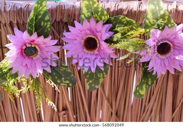 Chrysanthemum on Vetiver Grass .