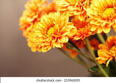 Chrysanthemums on wooden background.