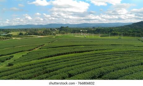 Chui Fong Tea Farm, Chiang-Rai Thailand