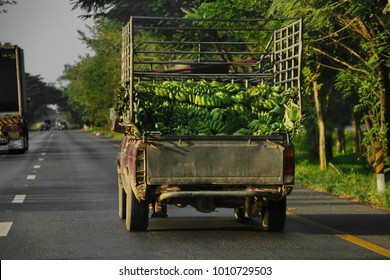 CHUMPHON, THAILAND - DECEMBER 12, 2017: Thai tropical fruit production farm and fruits of the labor. Pineapples and banas being transported to Bangkok