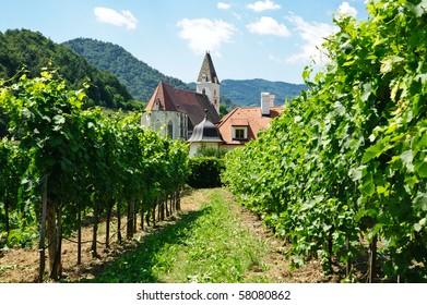 Church between Vine Branch, taken in Wachau, Lower Austria