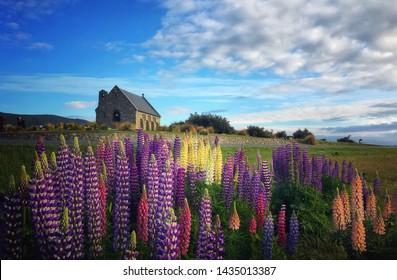 Church of the Good Shepherd lupin