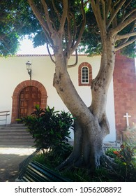 Church Nuestra Señora de las Nieves of beautiful small village Taganana, one of Tenerife's oldest villages. Square with Indian laurel trees. (Macizo de Anaga, North of Tenerife, Canary Islands, Spain)