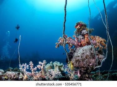 Chuuk Underwater Garden