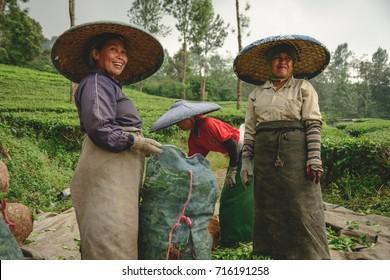 CIANJUR, INDONESIA - JUNE 10, 2014: Tea pickers at Cianjur Tea Plantation in central Java, Indonesia