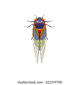 Cicada Illustration