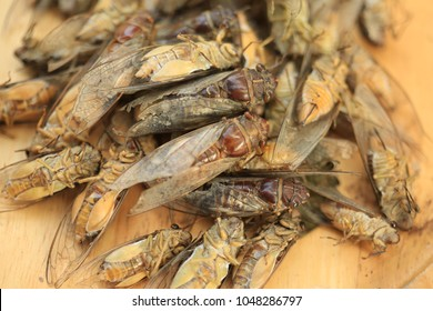 cicada insect on nature background.
