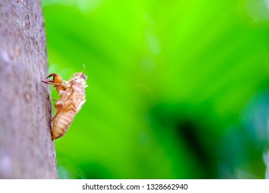 Cicada stain on the tree