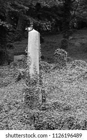 CIESZYN, POLAND – JUNE 23: black and white photo of some headstones covered with ivy on the old jewish cemetery in Cieszyn, Poland, June 23, 2018