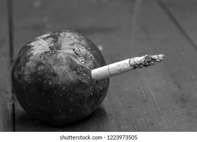 Cigarette inserted in a rotten dried apple, the concept of harm of smoking, black and white photo