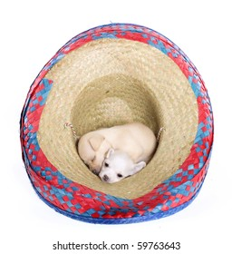 """""""Cinco de Mayo"""" celebration. Two Puppies: one white, one tan chihuahua puppies inside a red, blue, natural woven Mexican sombrero hat, isolated on white."""