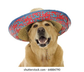 Cinco De Mayo partying Yellow Labrador Retriever wearing a red, blue, natural woven sombrero hat, isolated on white.
