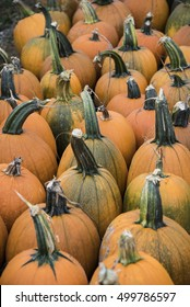 Cinderella pumpkin display at farm market