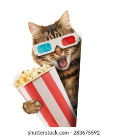 Cinema concept. Cat in the 3d glasses with popcorn basket.
