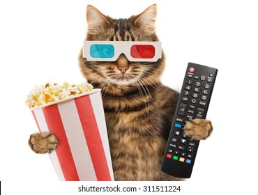 Cinema concept. Funny cat in the 3d glasses with popcorn basket. It is holding a remote control to TV.
