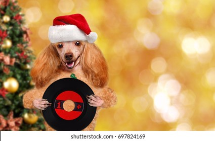 Cinemagraph - Music headphone vinyl record dog . Christmas. Motion Photo.